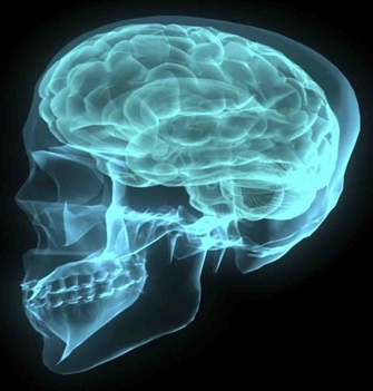 cerebro_neuromarketing_merca