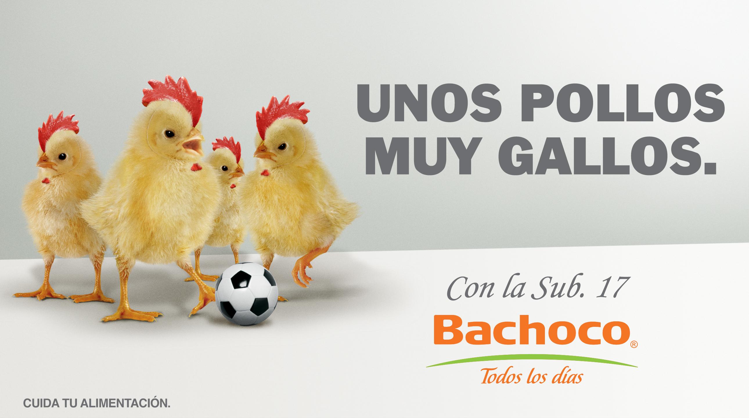 BACHOCO-POLLOS GALLOS-