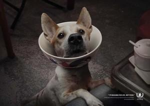 AW_Dog Bowl 01