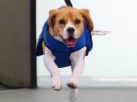 KLM utiliza un tierno perrito para entregar las cosas olvidadas en el avión (video)