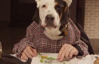 Las mascotas también la celebran la cena de Navidad (video)