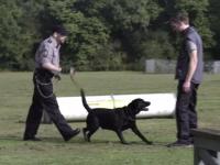 Sniffers: perros entrenados para detectar enfermedades de transmisión sexual (video)