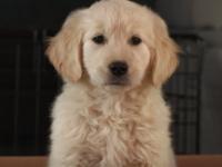 Anuncio de GoDaddy para el Super Bowl enfurece a los defensores de los animales