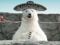 El aguacate mexicano estará en el Super Bowl en un divertido anuncio (video)