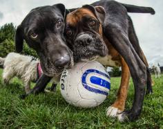 fotos de perros 2