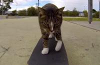 Viral: ¿por qué un gato en patineta puede ser tan popular?