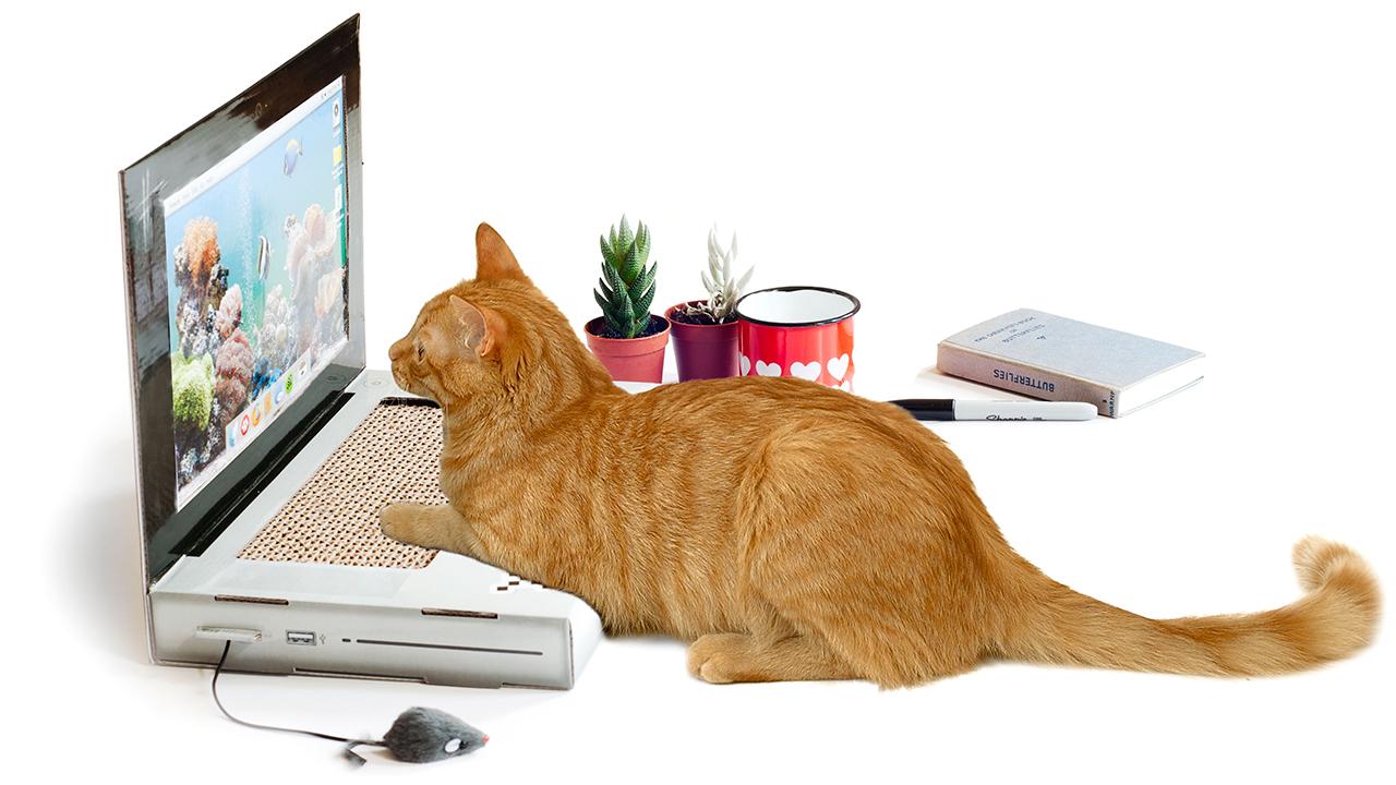 laptop para gato
