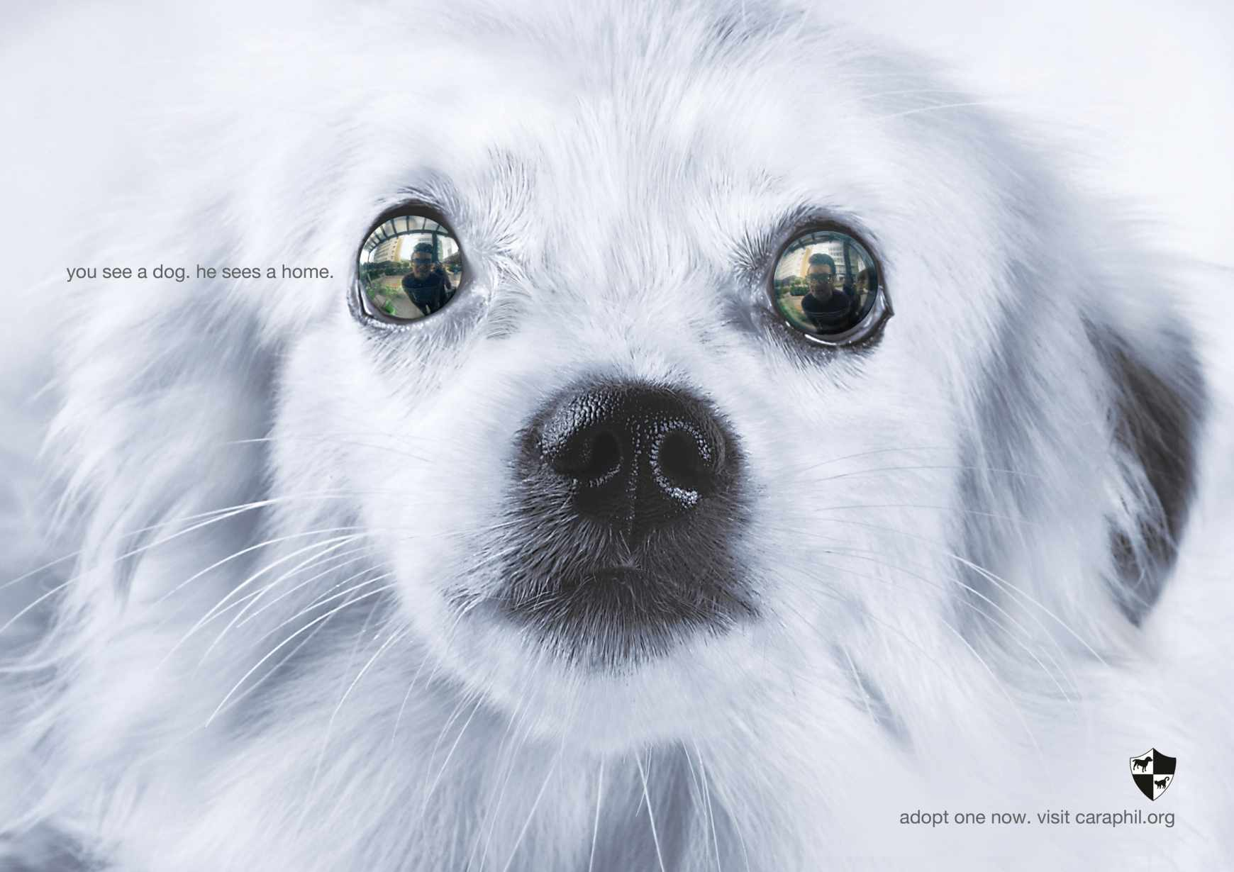7_-_dog_material_aotw
