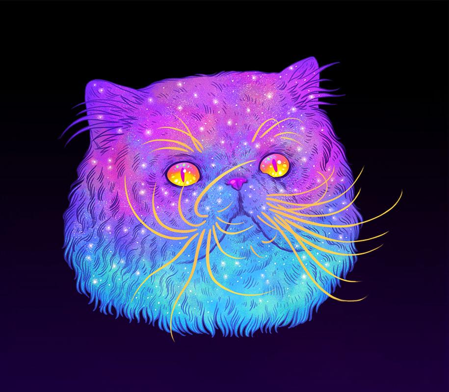 gatos8