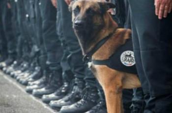perra policia francesa t