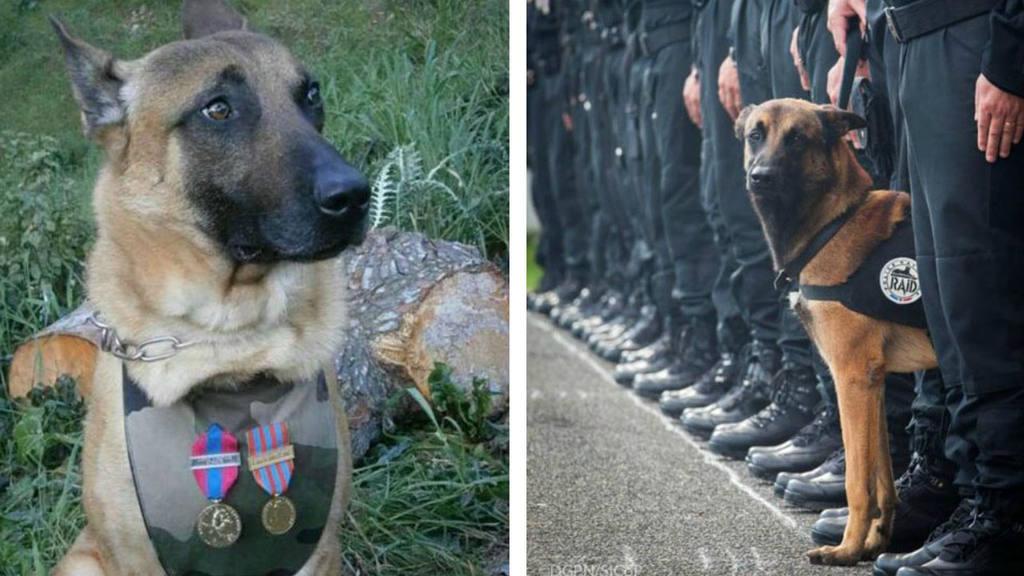 perra policia francesa