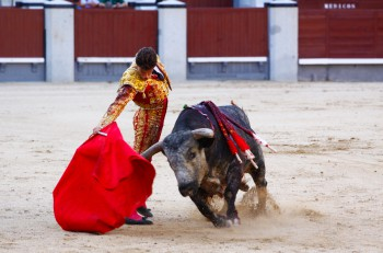 Madrid, Spain - June 25, 2011: Novilladas in Las Ventas. Novillero: Francisco Montiel. Bulfighting has been prohibited in Catalunia since 2011 for animal torturing. June 25, 2011 in Madrid, Spain. ** Note: Soft Focus at 100%, best at smaller sizes