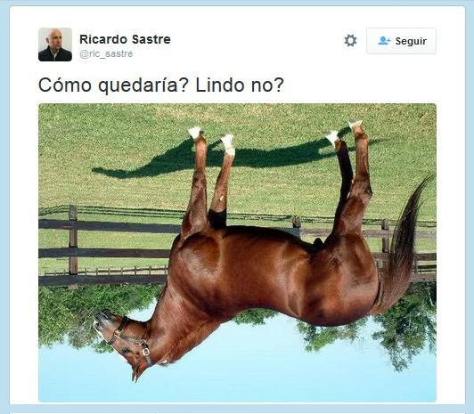 caballo diseño