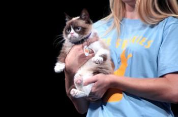 El gato Grumpy. Su propietaria registró su imagen, por lo que hacer memes con su imagen requiere de autorización. Imagen: Flickr.