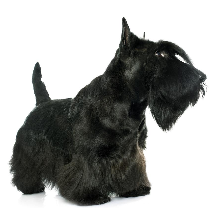 De a perrito mostrando su culo negro - 4 2