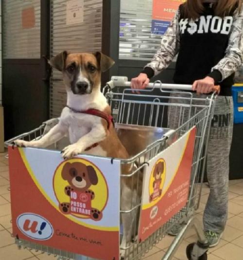 Resultado de imagen de carritos para perros