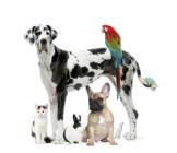 mascotas-apoyo