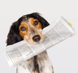 This dog just fetched the newspaper for it's boss