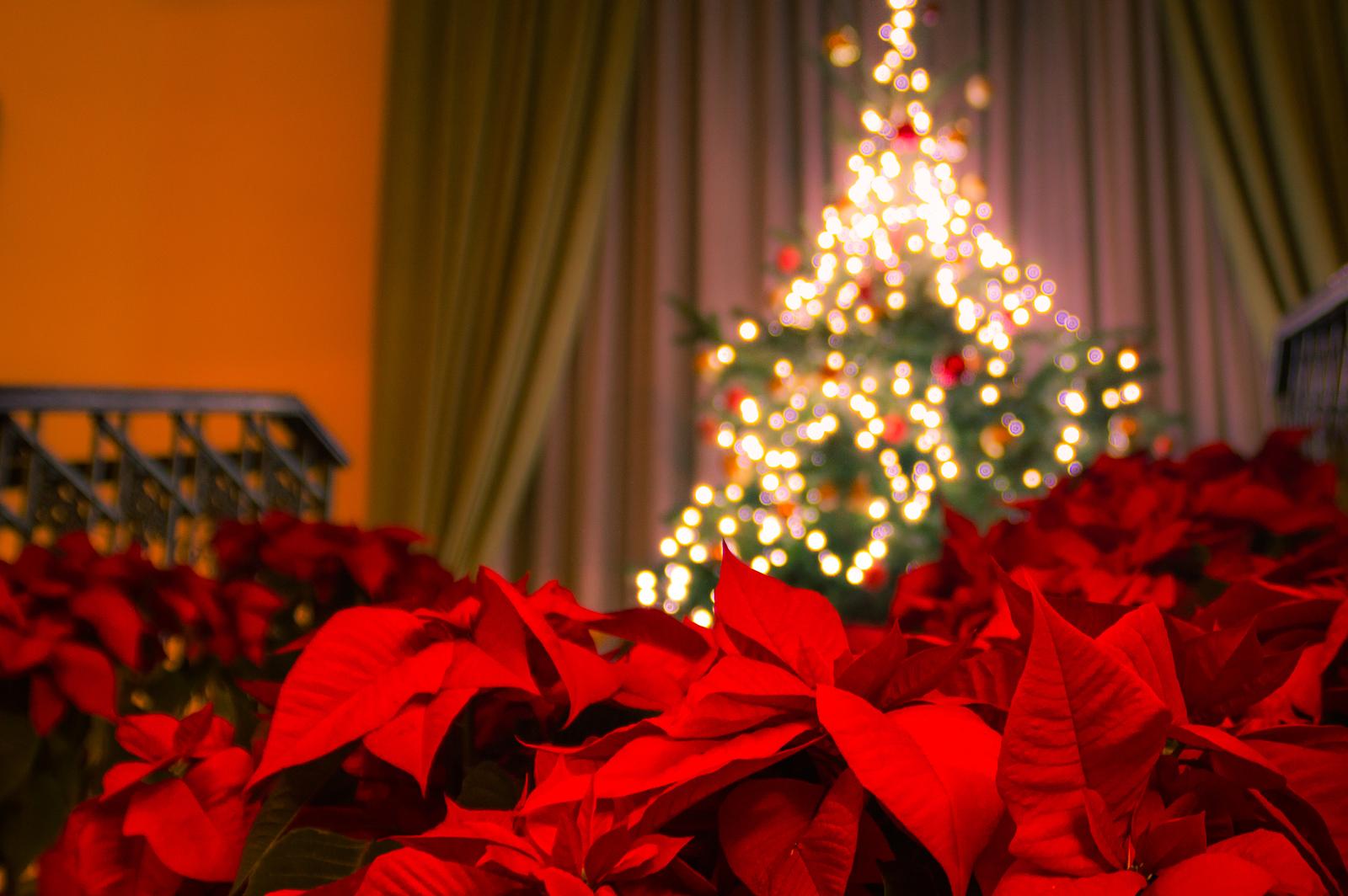 3 estrategias de marketing online a tener en cuenta esta for Navidad on line