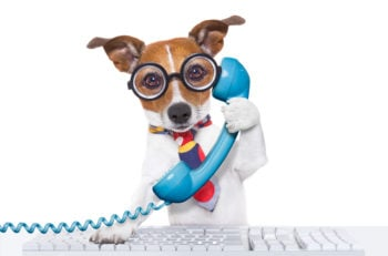 jack russell dog on a call center using the phone or telephone and computer pc keyboard isolated on white background