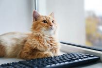 gato_mascotas