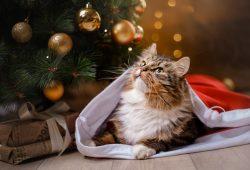 Christmas-New Year-Navidad-Bigstock