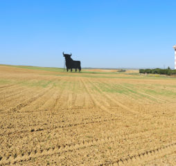 cultivated field with monument of the Osborne Bull