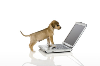 A Cute brown puppy looking at computer screen