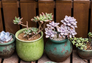 Rectangular arrangement of succulents; cactus succulents in a pl