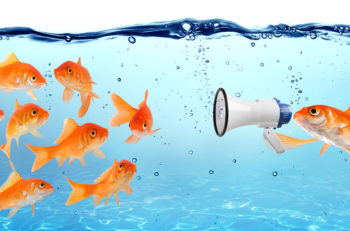 Announcement conference or political campaign, goldfish talks about the megaphone