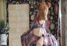 animales_campaña protectora despacito