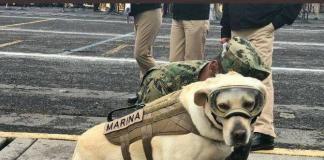 Frida, perra rescatista de la Marina. I