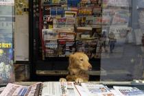 diarios-medios impresos-bigstock