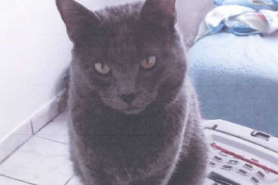 VivaAerobus pierde un gato de una de sus clientes
