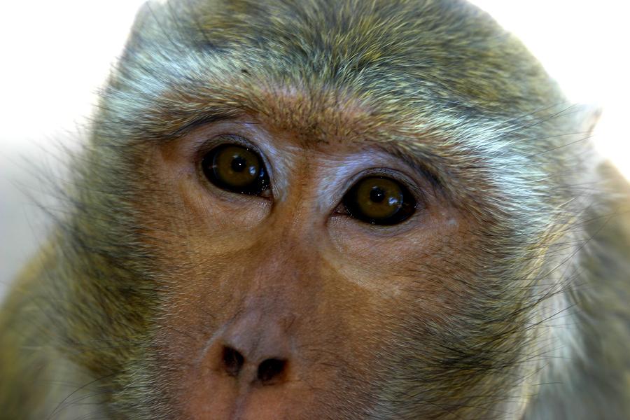 Acusan a automotrices alemanas de realizar pruebas con monos y humanos