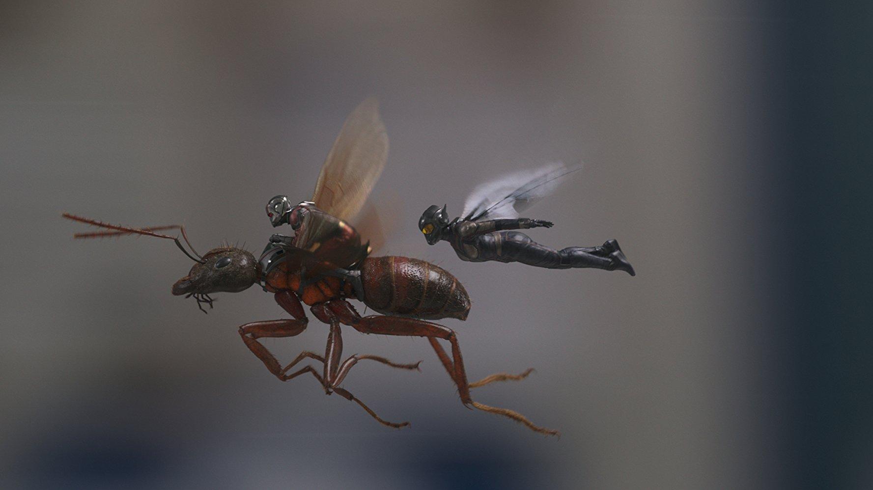¿Por qué Ant-Man no aparece en Infinity War?