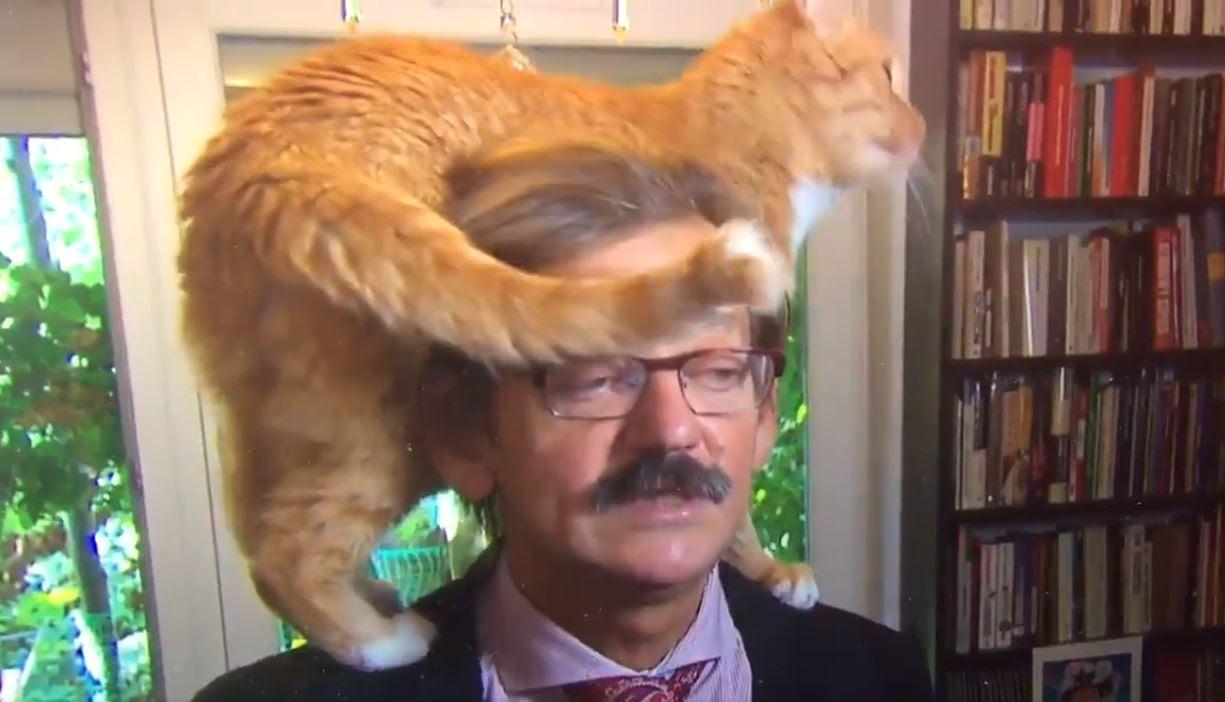 Gato interrumpe entrevista a su dueño y se hace viral