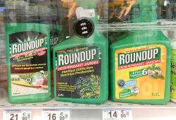 monsanto-Roundup