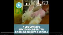conejos-angora-peta-gucci-video