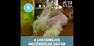 conejos-angora-peta-gucci-video