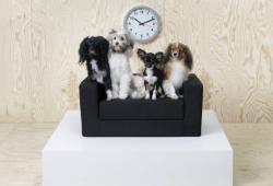 ikea sofá mascotas