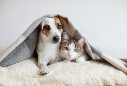 Carnivac-cov es para mascotas
