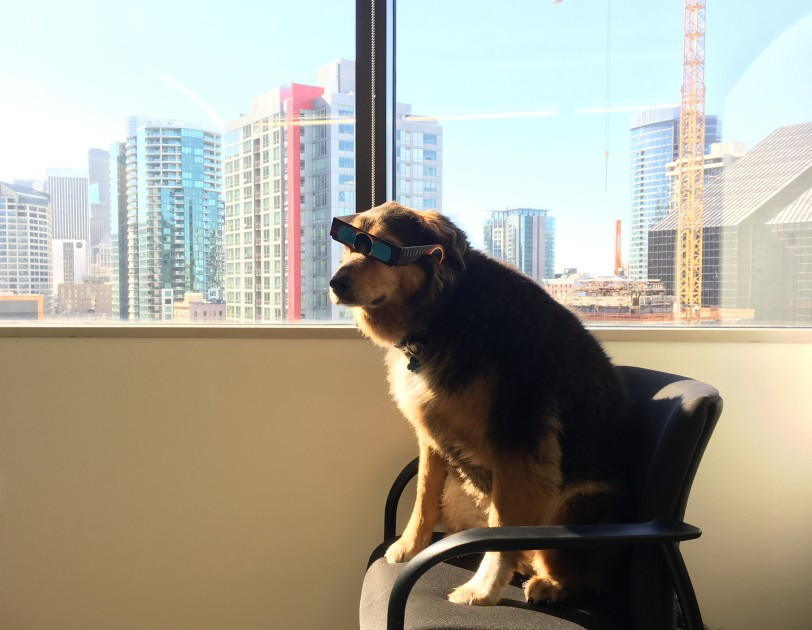 Amazon Headquarters Pet Friendly