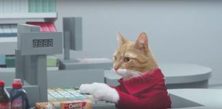 gatos-dia-internacional-de-gato