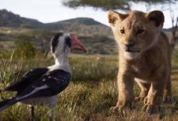 el rey leon trailer youtube