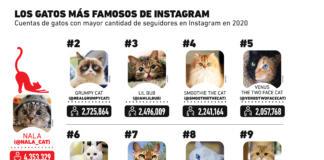 Estos son los gatos más famosos de Instagram
