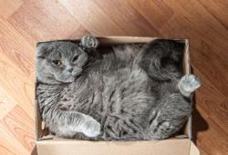 Bigstock-Cat-Gato-Amazon