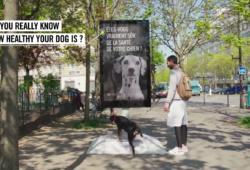 Campaña destacada: Street-Vet, la innovadora campaña de Purina con la publicidad exterior