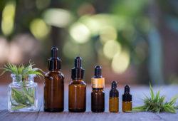 uso medicinal del cannabis en México