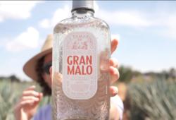 Luisito Comunica Presenta su Tequila GRAN MALO